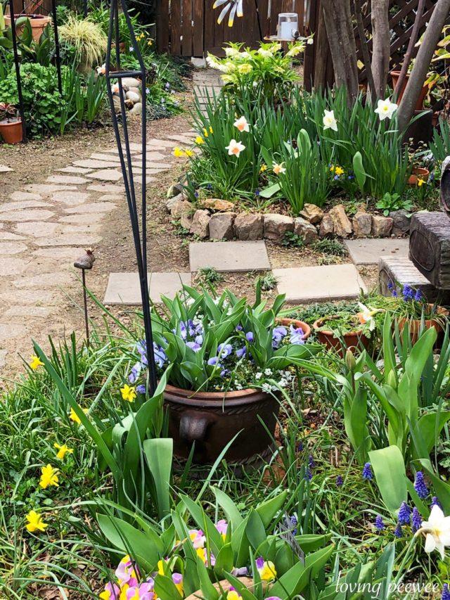 春の庭2019
