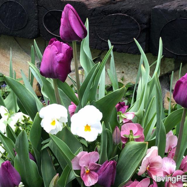 四月の中庭へご案内します。