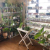 Green Room(植物の部屋)のお話し