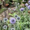 梅雨の庭を彩る花々